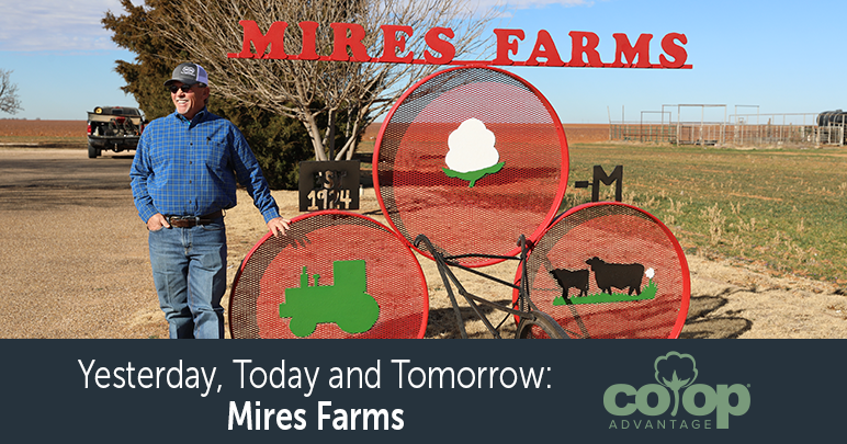 Yesterday, Today and Tomorrow: Mires Farms