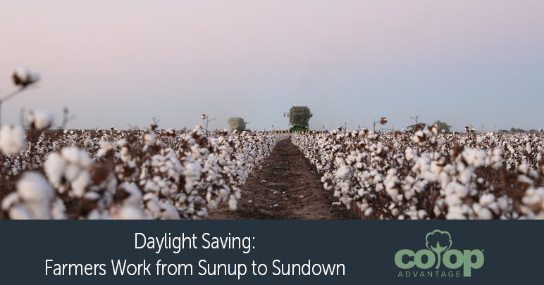 Daylight Saving Cotton Stripper in Field